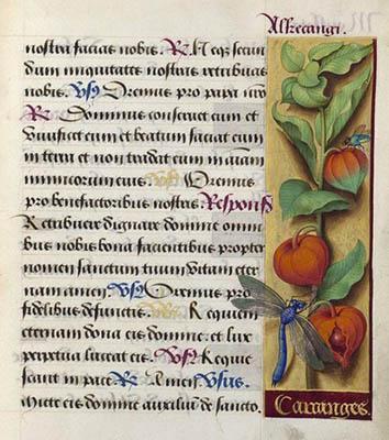 Grandes heures d'Anne de Bretagne - Folio 224 - Alkekenge.